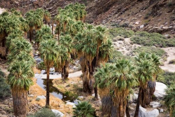 Waterfalls in Anza Borrego Desert | Anza Borrego Desert